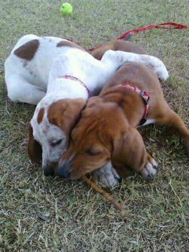 Lucky Dog Animal Rescue Az