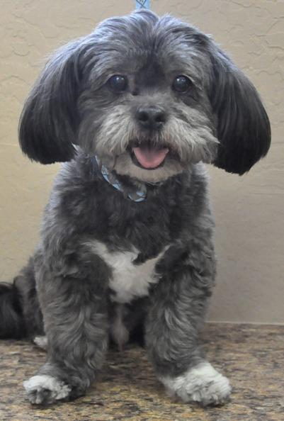 ... small dogs dog breeds picture hsmo org adopt adoptable pets small dogs