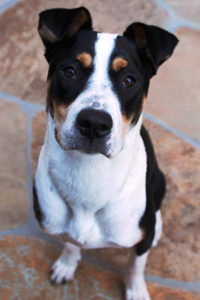Adopt A Dog Quot Debs Quot Scottsdale Arizona
