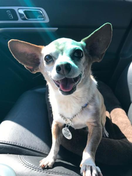 Adopt a Dog - Milton from Scottsdale Arizona