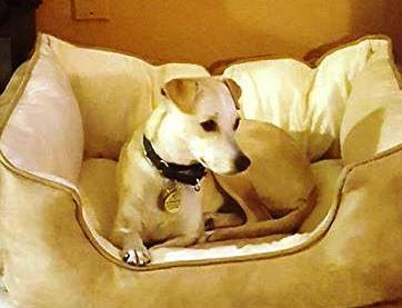 Adopt a Dog - Mindee from Scottsdale Arizona