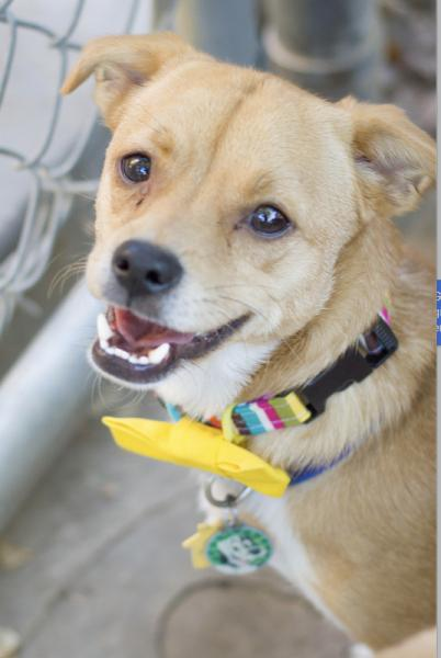Adopt a Dog - Zander from Scottsdale Arizona