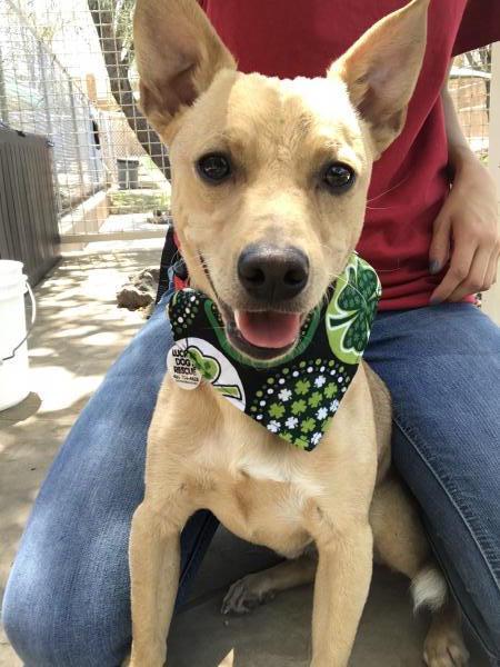Adopt a Dog - Mitch from Scottsdale Arizona