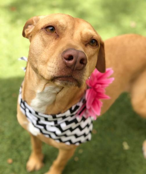 Adopt a Dog - Susie from Scottsdale Arizona