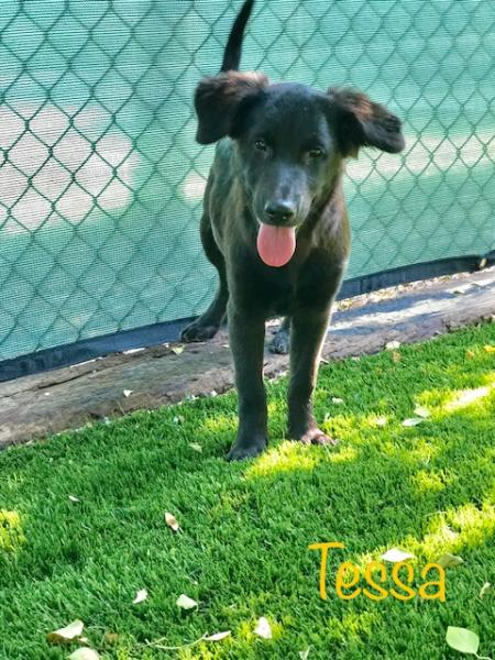 Adopt a Dog - Tessa from Scottsdale Arizona