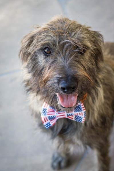 Adopt a Dog - Winnie from Scottsdale Arizona