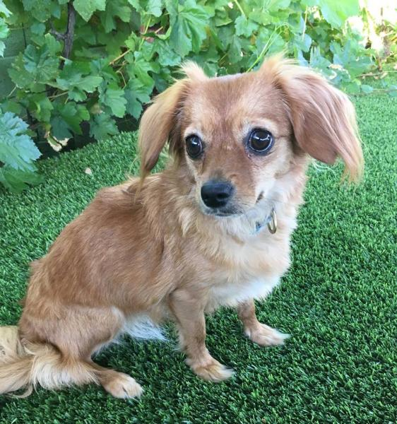 Adopt a Dog - Emilee from Scottsdale Arizona