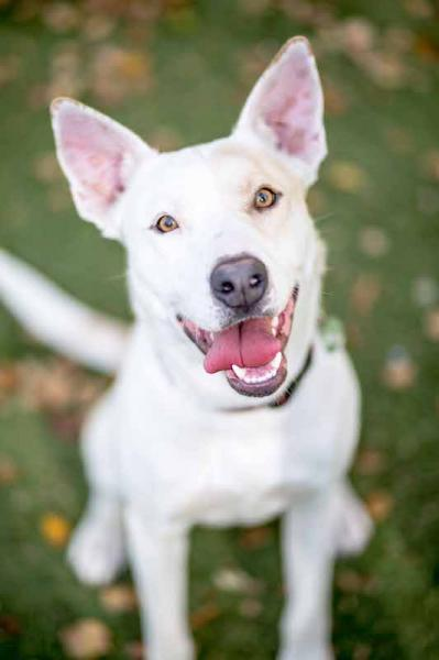 Adopt a Dog - Darcy from Scottsdale Arizona