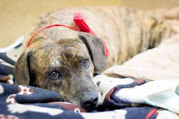 Adopt a Dog - Fernando from Scottsdale Arizona