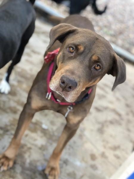 Adopt a Dog - Trixie from Scottsdale Arizona