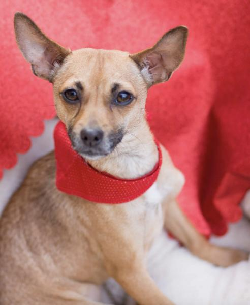 Adopt a Dog - Serafina **Part of a bonded pair** from Scottsdale Arizona