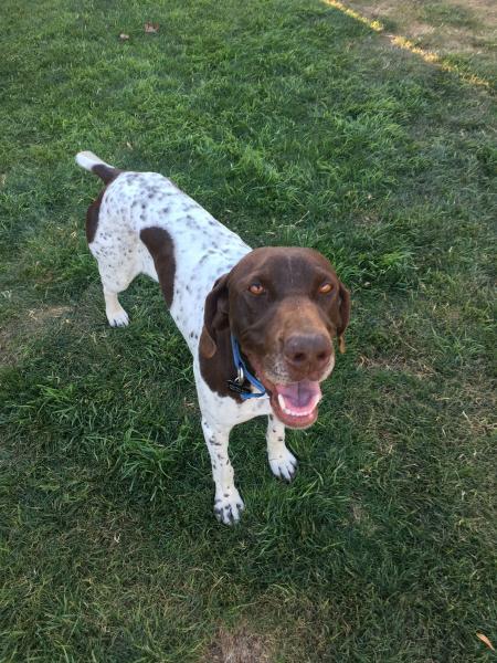 Adopt a Dog - Stella from Scottsdale Arizona