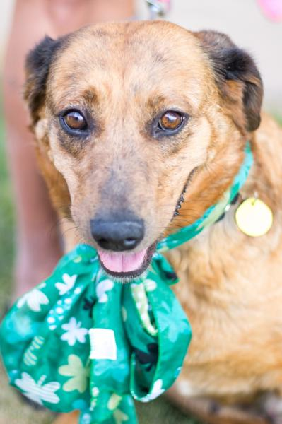 Adopt a Dog - Pumpkin from Scottsdale Arizona