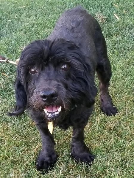 Adopt a Dog - Corabelle2 from Scottsdale Arizona