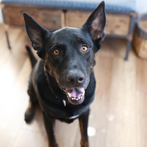 Adopt a Dog - Shadow2 from Scottsdale Arizona