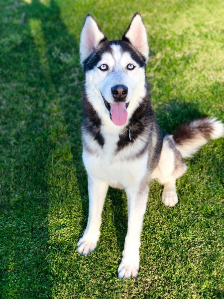 Adopt a Dog - Blizzard from Scottsdale Arizona