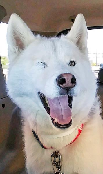 Adopt a Dog - Liam from Scottsdale Arizona