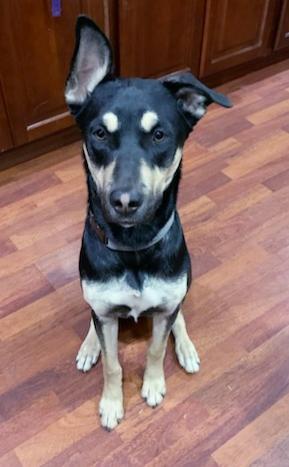 Adopt a Dog - Athena from Scottsdale Arizona