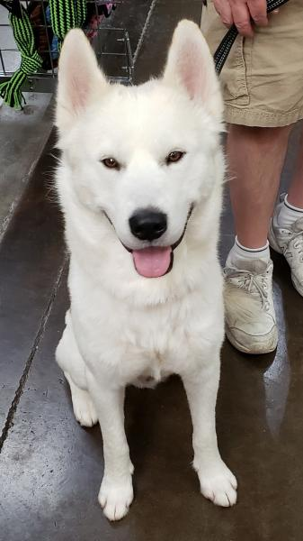 Adopt a Dog - Tenzin from Scottsdale Arizona