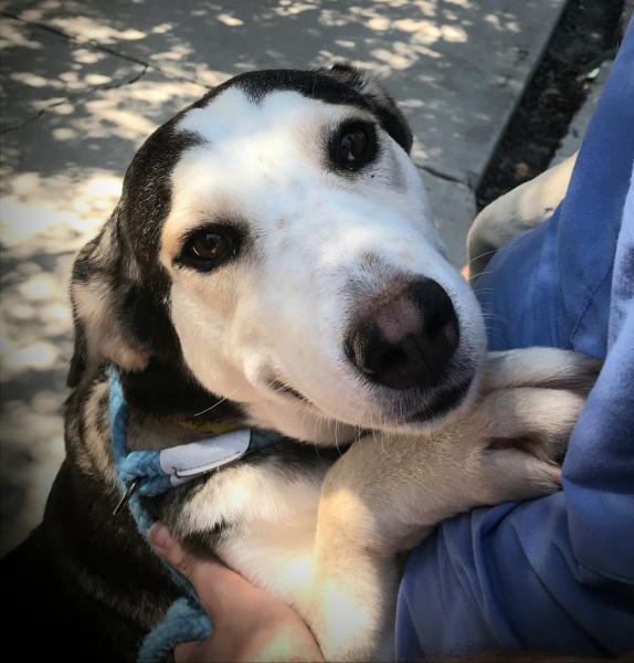 Adopt a Dog - Sallie from Scottsdale Arizona