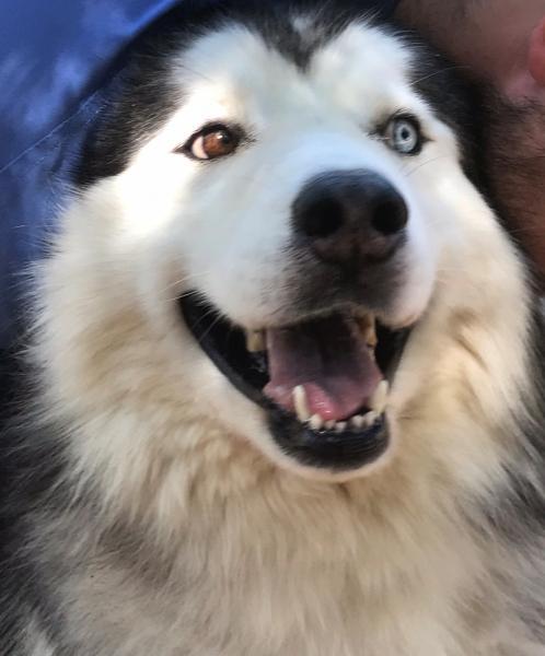 Adopt a Dog - Zeus Ebony from Scottsdale Arizona