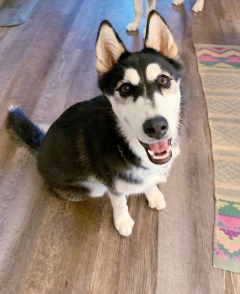 Adopt a Dog - Naruto from Scottsdale Arizona