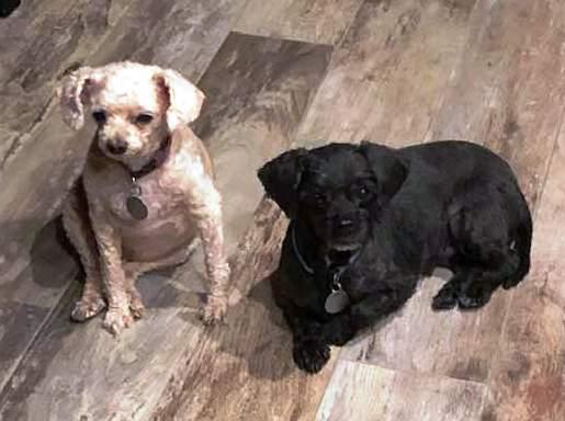 Adopt a Dog - Blondie and Priss from Scottsdale Arizona