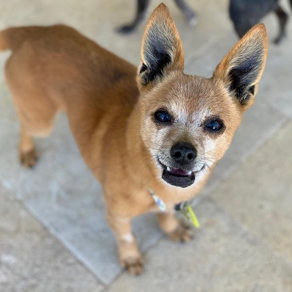 Adopt a Dog - Rockie from Scottsdale Arizona