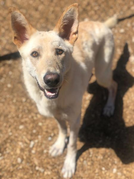 Adopt a Dog - Marcella from Scottsdale Arizona