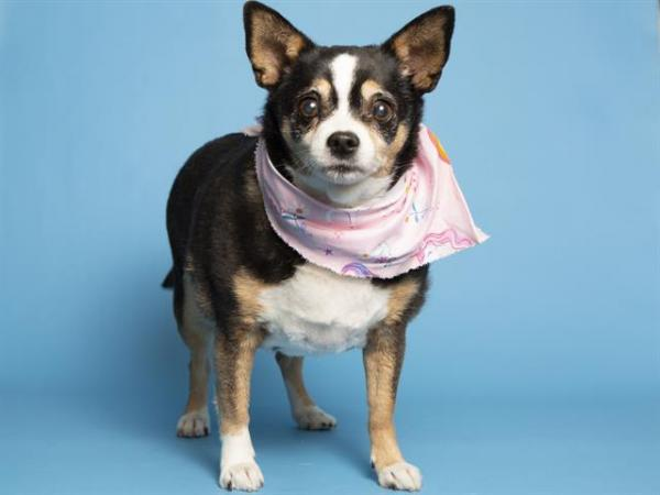 Adopt a Dog - Gigi from Scottsdale Arizona
