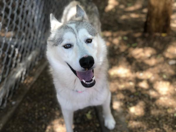 Adopt a Dog - Everly from Scottsdale Arizona