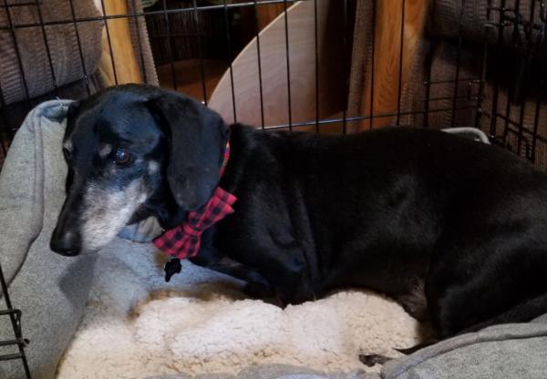 Adopt a Dog - Kobi (Bonded Pair-Tucker) from Scottsdale Arizona
