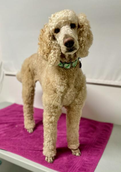 Adopt a Dog - Maxie from Scottsdale Arizona