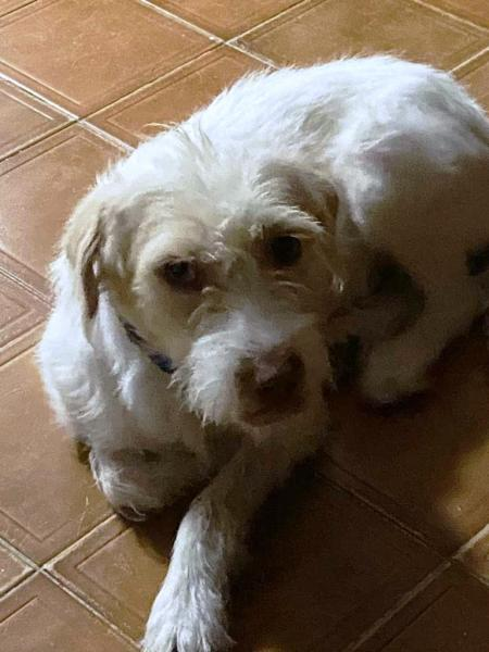 Adopt a Dog - Paco from Scottsdale Arizona
