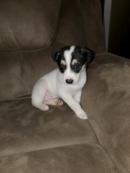 Adopt a Dog - Meadow from Scottsdale Arizona