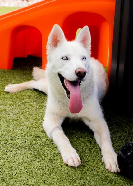 Adopt a Dog - Tatiana from Scottsdale Arizona