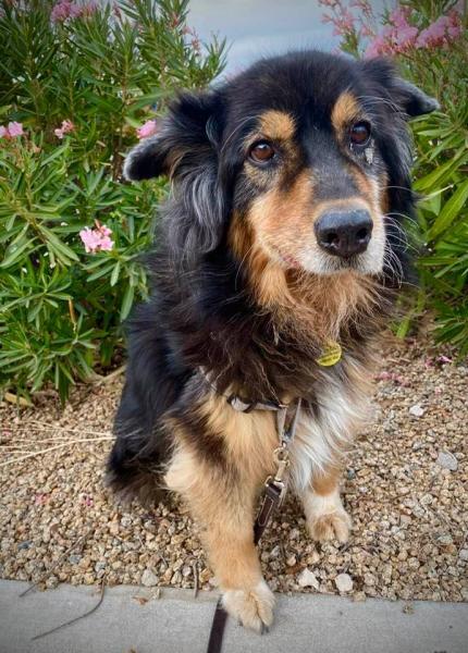 Adopt a Dog - Molly from Scottsdale Arizona